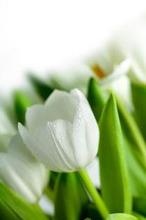 Weiße Tulpen von Nailia Schwarz