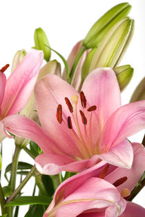 Lilien von Nailia Schwarz