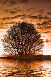 Baum-Art by Bernhard Kaiser