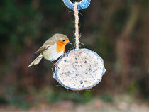 Robin on Feeder by Graham Prentice