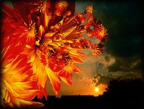 Power-sunrise-hypertiling-bearbeitet