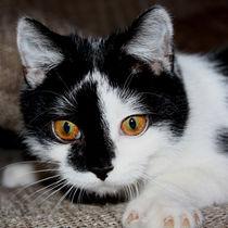 Katze von Christine Bässler