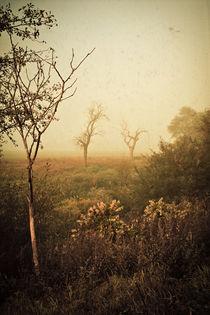 Herbstmorgen by Mandy Tabatt