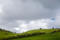 Cows silhouetted on top of a green hill in County Clare, Ireland von kbhsphoto