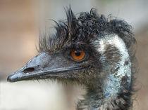 Emu137pe
