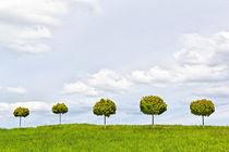 Frühlingsbäume von Wolfgang Dufner