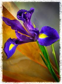 Iris von Cesar Palomino