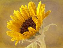 Sunflower von Fiona Messenger