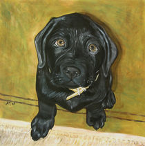 Labrador Welpe by Annett Tropschug
