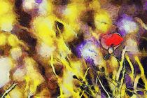 Poppy by Odon Czintos