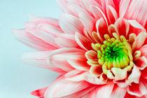 Traum in Farbe von Andreas Hensel