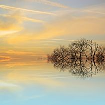 Suntrees