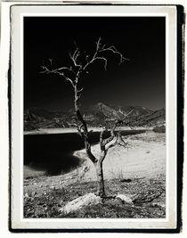 Drought in Andalucia von Brian Grady