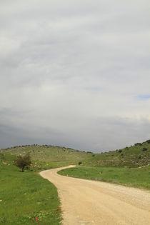 A road in a green desert by Hanan Isachar