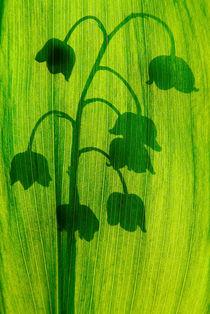 Lily of the valley von Odon Czintos