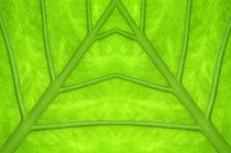Green leaf von Odon Czintos