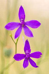Pink flowers by Odon Czintos