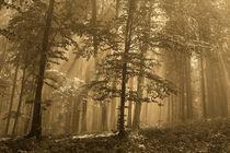 Gold forest by Odon Czintos