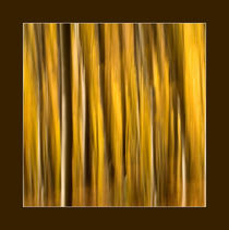 Forest in abstract by Odon Czintos