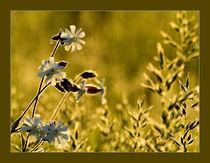 Flowers by Odon Czintos