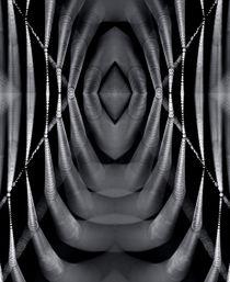 The light web reflection by Odon Czintos