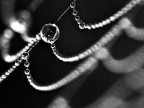 Drop on the web by Odon Czintos