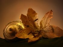 Muschel mit Blüte by Elke Balzen