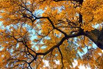 Autumn by Víctor Bautista
