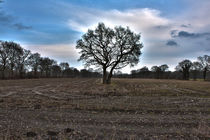 Baum Stoppelfeld Schirum by michas-pix