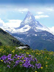 Schweiz, Alpen, Traumwiese mit Matterhorn.jpg von Karel Plechac