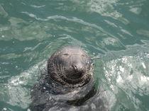 Happy Seal  by Azzurra Di Pietro