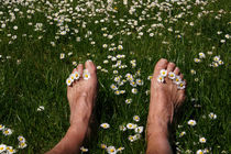 Frühling auf der Wiese mit Gänseblümchen by magdeburgerin