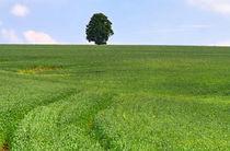 Baum im Feld von Wolfgang Dufner
