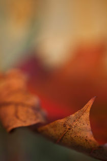 autumn leaf by studioflara