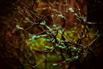 les branches by alice-insomnia