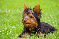 My little dog by AD DESIGN Photo + PhotoArt