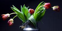 Tulpen in der Milchkanne von Falko Follert