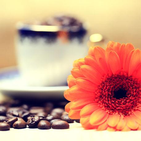Gerbera-kaffeebohnen-cappuccinotasse