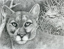 Cougar by Lawrence Tripoli