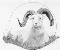 Dall Sheep von Lawrence Tripoli