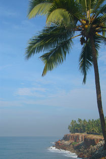 Palm Trees on the Cliff Varkala von serenityphotography