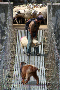 Goats on Suspension Bridge Tikhedhunga von serenityphotography