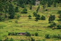 House Amongst Rice Fields near Birethanti von serenityphotography