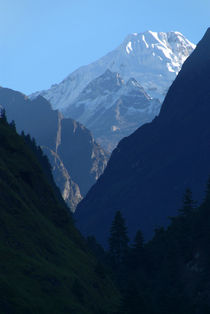 Pines and Mountains near Dharapani von serenityphotography