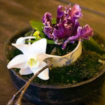 Orchideenschale - Still Life von captainsilva