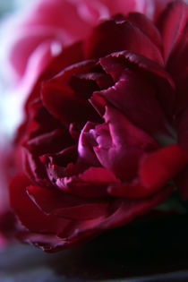 'Crimson Red Carnation' von Elizabeth  Wilson