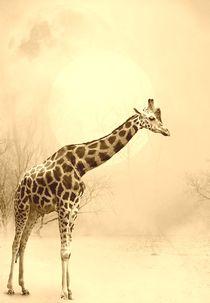 Winter-giraffe