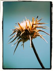 Thistle by Brian Grady