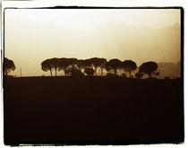 Treeline by Brian Grady