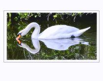 Reflecting Swan by Brian Grady